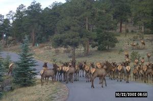 Elk Shot
